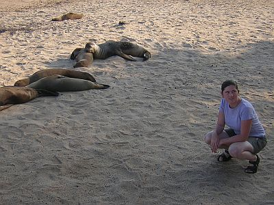 seals on beach.jpg